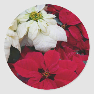 White and Red Poinsettias II Christmas Holiday Classic Round Sticker