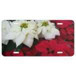 White and Red Poinsettias II Christmas Holiday License Plate