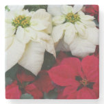 White and Red Poinsettias II Christmas Holiday Stone Coaster