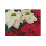 White and Red Poinsettias II Christmas Holiday Wood Poster