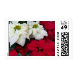 White and Red Poinsettias Postage