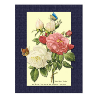 White and Red Roses Botanical Postcard