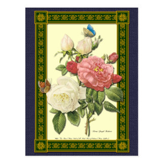 White and Red Roses Botanical Postcard Post Card