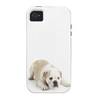 White and tan bulldog case for the iPhone 4