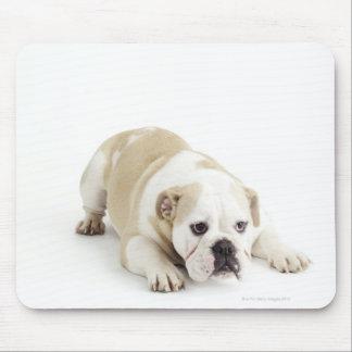 White and tan bulldog mouse pad