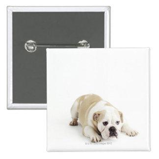 White and tan bulldog pinback button