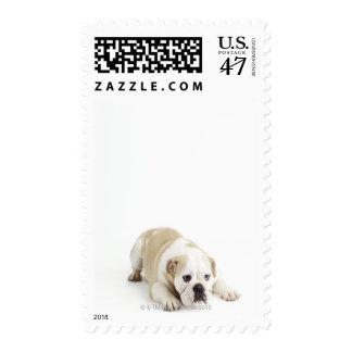 White and tan bulldog postage