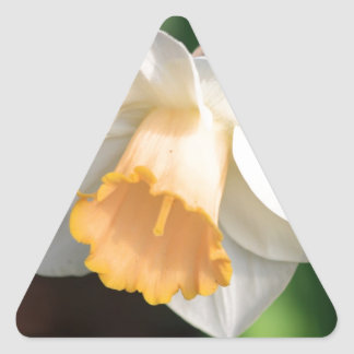 White and Yellow Daffodil Flowers for Floral Lover Triangle Sticker