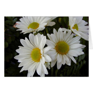 White and Yellow Daisies Blank Note Card