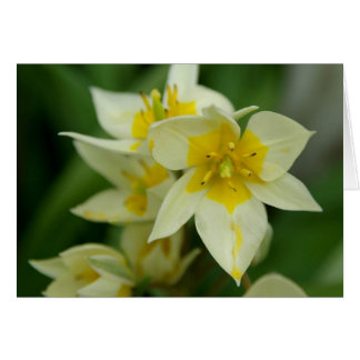 White and Yellow Flower Notecard Cards