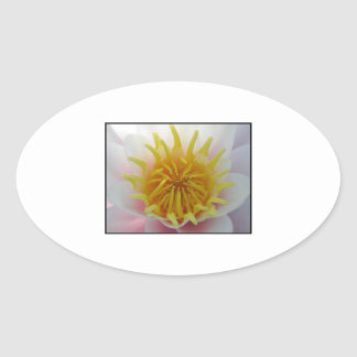 White and Yellow Flower. Oval Sticker