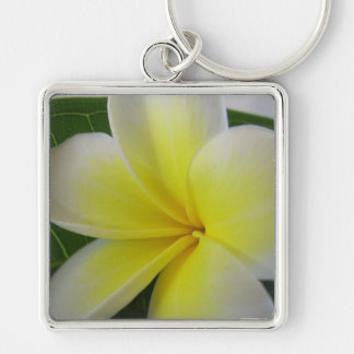 White And Yellow Frangipani Flower Silver-Colored Square Keychain