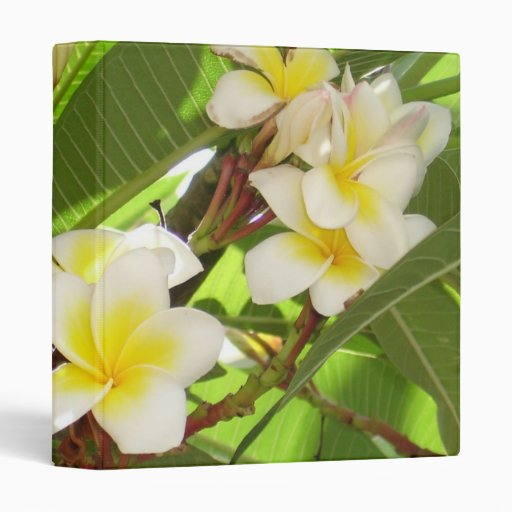 White and Yellow Frangipani Flowers with Leaves in Binder
