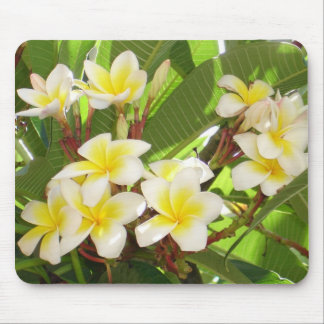 White and Yellow Frangipani Flowers with Leaves in Mouse Pad
