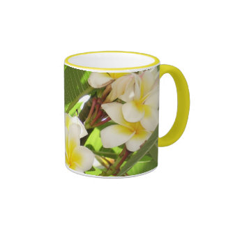 White and Yellow Frangipani Flowers with Leaves in Coffee Mugs