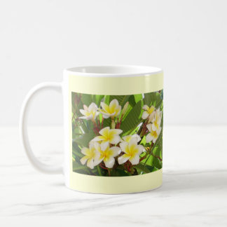 White and Yellow Frangipani Flowers with Leaves in Mugs