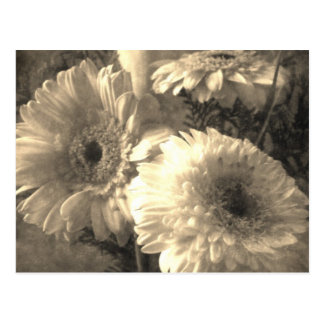 White and Yellow Gerbera and Calla 1 Antiqued Postcard