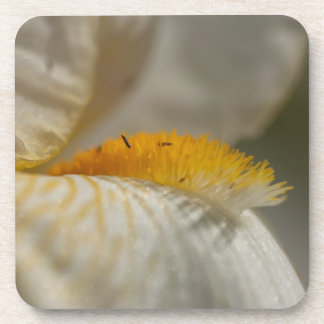 White and Yellow Iris Beverage Coaster