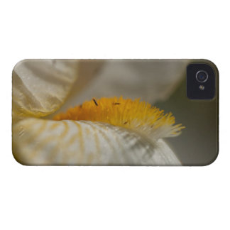 White and Yellow Iris iPhone 4 Case-Mate Case