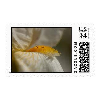 White and Yellow Iris Postage Stamp