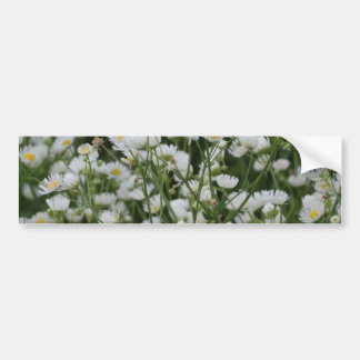 White and Yellow Mini little Daisy Aster flowers Bumper Sticker