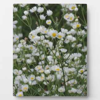 White and Yellow Mini little Daisy Aster flowers Plaque