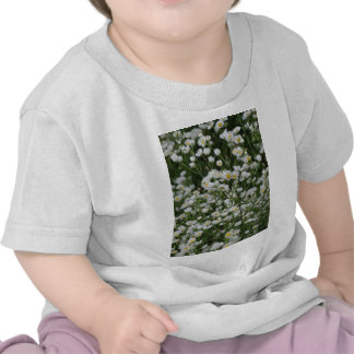 White and Yellow Mini little Daisy Aster flowers Shirt