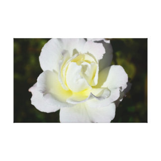 White and Yellow Rose Canvas Print