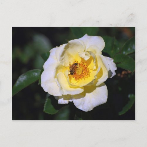 White and Yellow Rose with Honeybee Postcard postcard