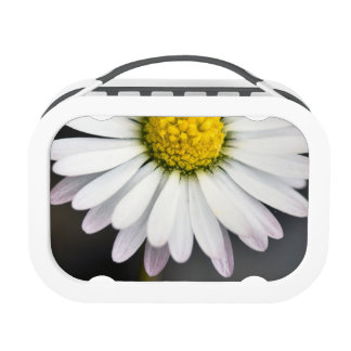 White and yellow wild daisy lunch box