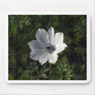 White Anemone coronaria from the Galilee ( Mouse Pad