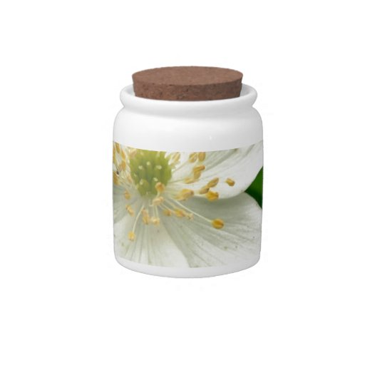 White Anemone Flowers Candy Jars