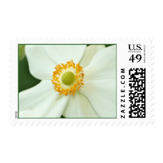 """White Anemone"" Postage Stamps"