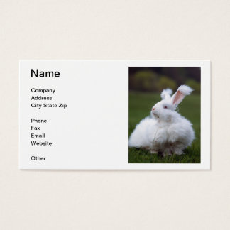 White Angora Rabbit Business Card