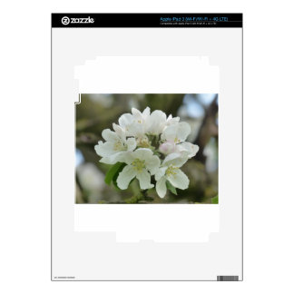 White Apple Blossom Decals For iPad 3