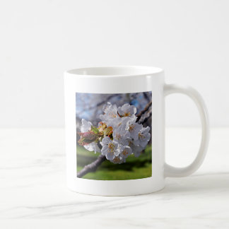 White apple blossoms in spring coffee mug