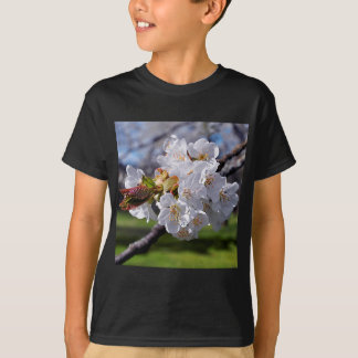 White apple blossoms in spring T-Shirt