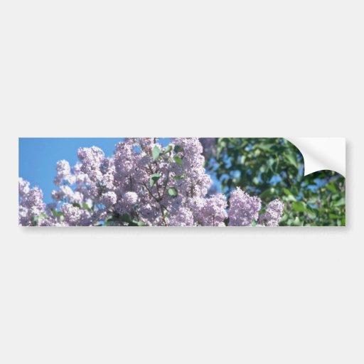white Apple blossoms, Renfrew flowers Bumper Stickers