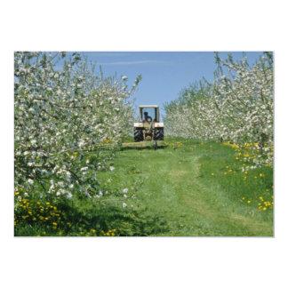 white Apple orchard cultivating, Nova Scotia flowe Announcements
