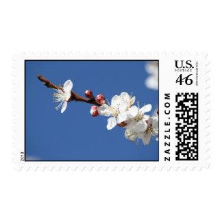 White Apricot Blossom Stamp