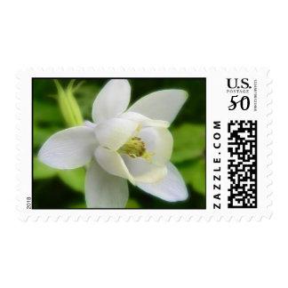 White Aquilegia Flabellata Postage