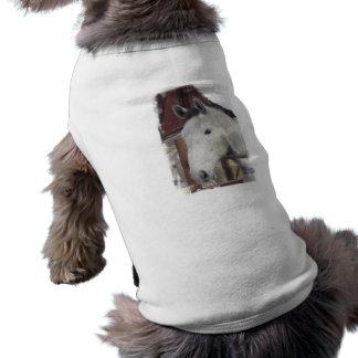 White Arabian Horse Pictures Pet Shirt