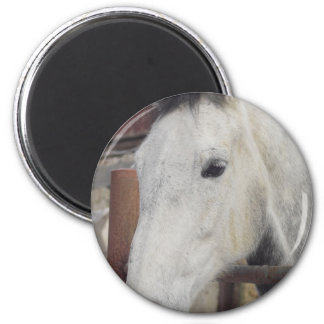 White Arabian Horse Pictures Round Magnet Refrigerator Magnet