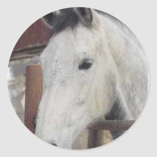 White Arabian Horse Pictures Stickers
