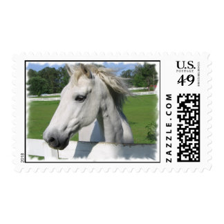 White Arabian Horse Postage Stamp