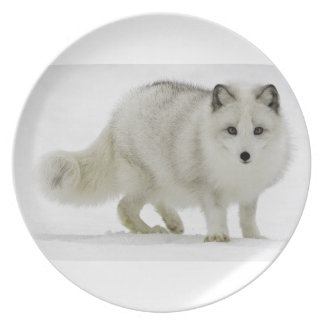 White Arctic Fox Blends Into The Snow Melamine Plate