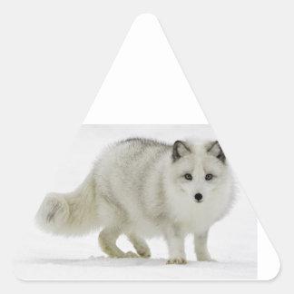 White Arctic Fox Blends Into The Snow Triangle Sticker