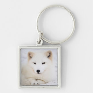 White arctic fox in snow keychain