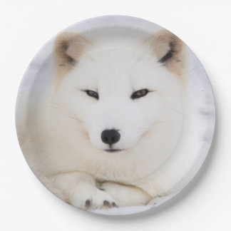 White arctic fox in snow paper plate