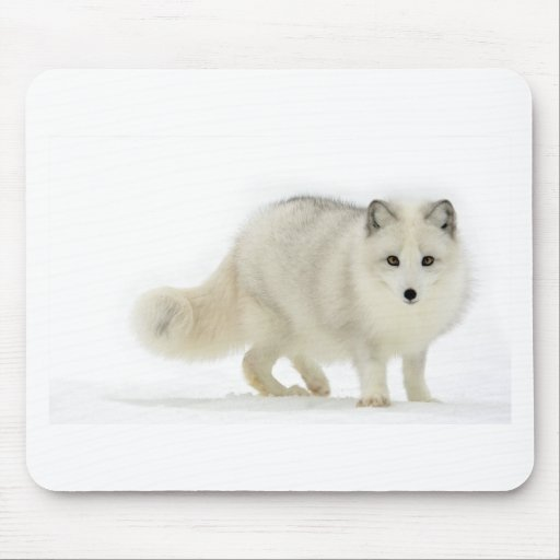 White Arctic Fox Mouse Pad
